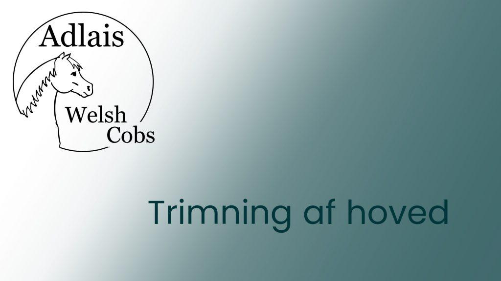 Welsh Cob trimning